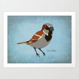 The House Sparrow Art Print