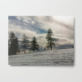 Snow and larch Metal Print