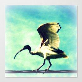 Ibis Bird Canvas Print