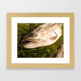 Trout Framed Art Print
