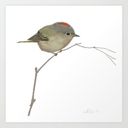 Ruby-crowned Kinglet Art Print