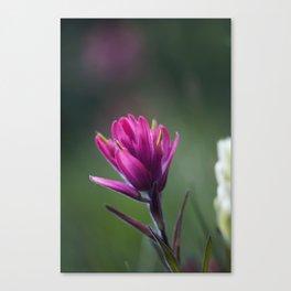 Pink Indian Paintbrush Canvas Print