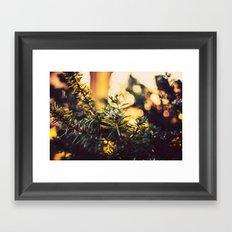 Evergreen Frost Framed Art Print