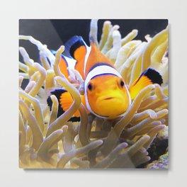Clownfish In Anemone Metal Print