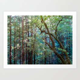 Lost in the Redwoods Art Print