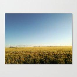 Wheat, Blue sky Canvas Print