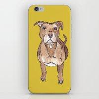 pitbull iPhone & iPod Skins featuring Pitbull by Tammy Kushnir