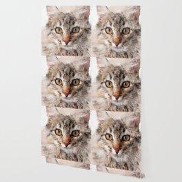 Cat Cinder #cat #kitty Wallpaper