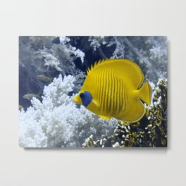 Butterfly Fish Over Fire Coral Metal Print