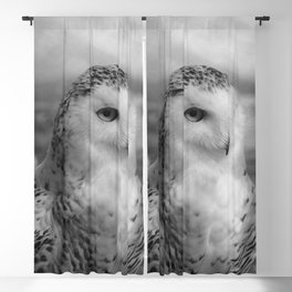 Snowy Owl - B & W Blackout Curtain