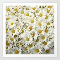 Daisy Mum Profusion Art Print