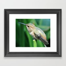 Chirp, Chirp Framed Art Print