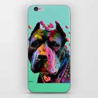 pit bull iPhone & iPod Skins featuring pit bull  by mark ashkenazi