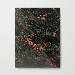 Leaves By Night Metal Print