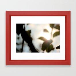 morning shade Framed Art Print