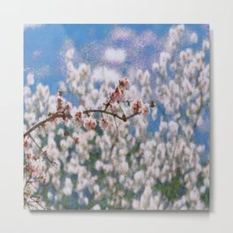 Blooming Almond Tree Metal Print