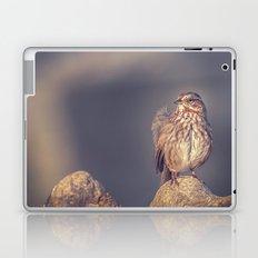 Song Sparrow Laptop & iPad Skin