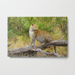 South African Leopard Metal Print