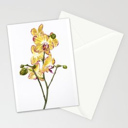 Yellow Phalaenopsis Orchid Traditional Artwork Stationery Cards