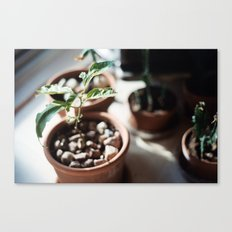 planter Canvas Print