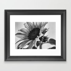 Sunflower Black & White Framed Art Print
