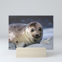Baby Seal Looking at You Now Mini Art Print