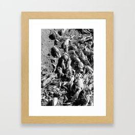 Crayfish Shells Framed Art Print