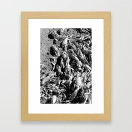 Crayfish Shells Framed Art Print