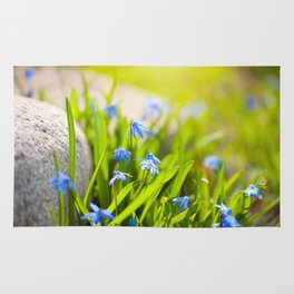 Scilla siberica flowerets named wood squill Rug