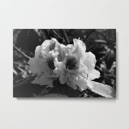 Azalea in Black and White Metal Print