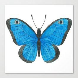 Morpho Butterfly Illustration Canvas Print