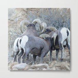 Watercolor Sheep, Bighorn Ram 28, Drake, Colorado Metal Print