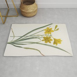 LEMON LILY - Yellow Daylily Flower Print Retro Vintage - Hemerocallis Flava - sweetly fragrant - Redoute Antique Rug