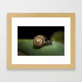 Garden snail Framed Art Print