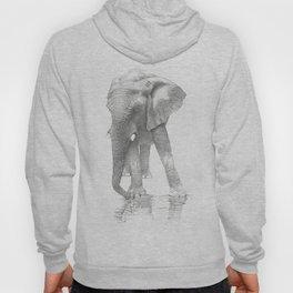 African Elephant, Loxodonta Africana Hoody