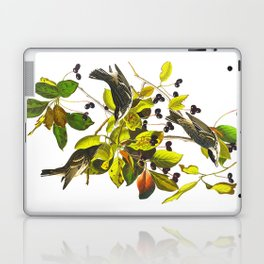 Blackpoll Warbler Bird Laptop & iPad Skin
