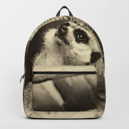 What happens? Backpack