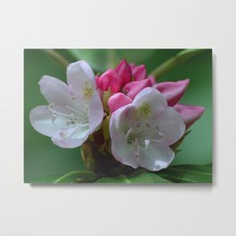 Rhododendrens in Bloom Metal Print
