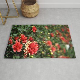 VIBRANT RED DAHLIAS - IN THE LATE AFTERNOON SUNSHINE Rug