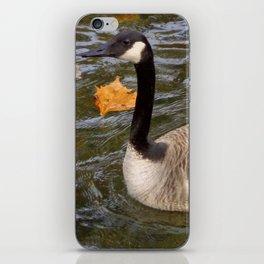 Canada Goose Swimming iPhone Skin