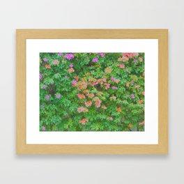 Bugambilias Framed Art Print
