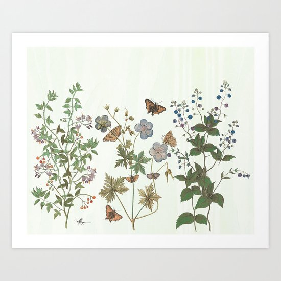 The fragility of living - botanical illustration by anipani