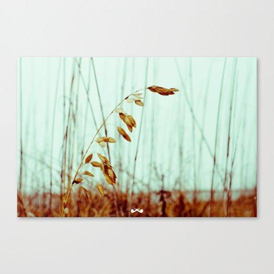 Sea Oats. Canvas Print