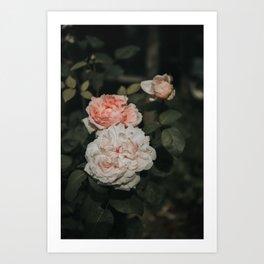 Pink & Pinker Art Print