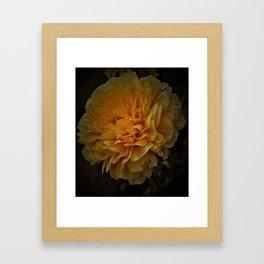 Sun Blossom (2) Framed Art Print