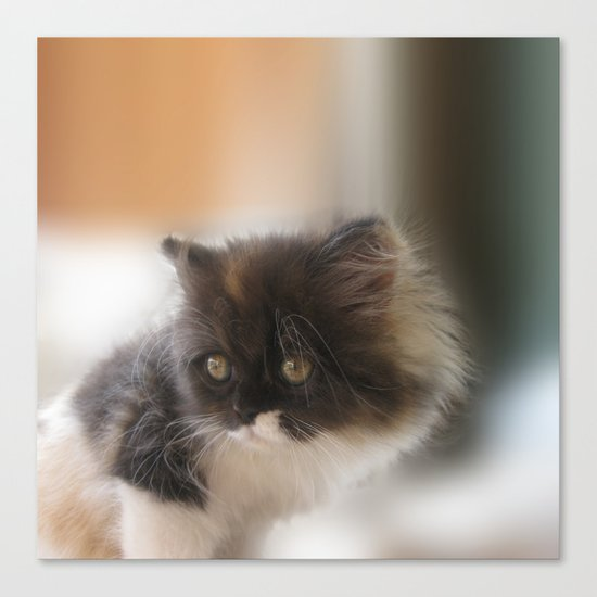 Nano Baby Kitten Canvas Print