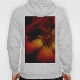 Tawny Autumn Roses Hoody