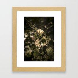 Sunlit beauty Framed Art Print