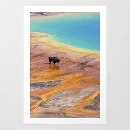 Bison and Grand Prismatic Hot Spring at Yellowstone National Park Art Print