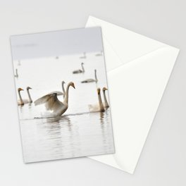 Swans. Stationery Cards